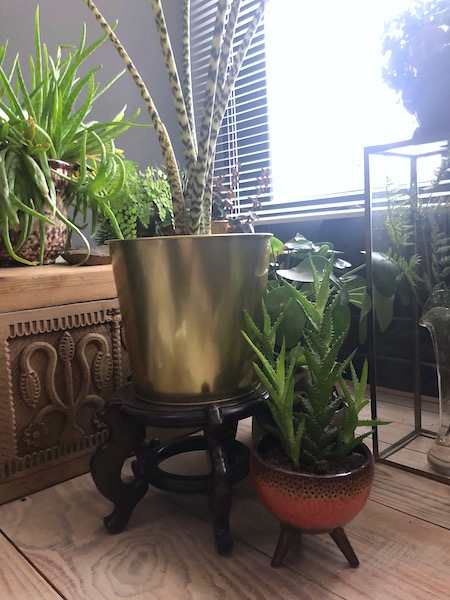 woman cave planten2