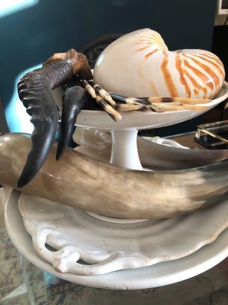 coffeetable-schelp