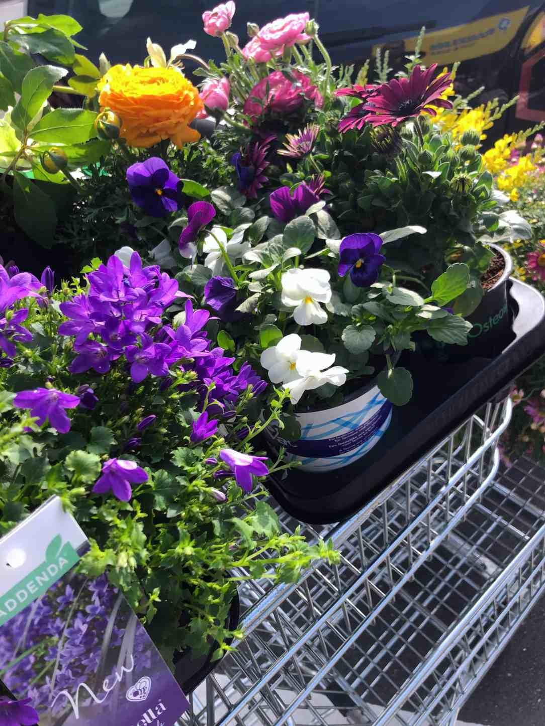 planten voor kleur in de tuin