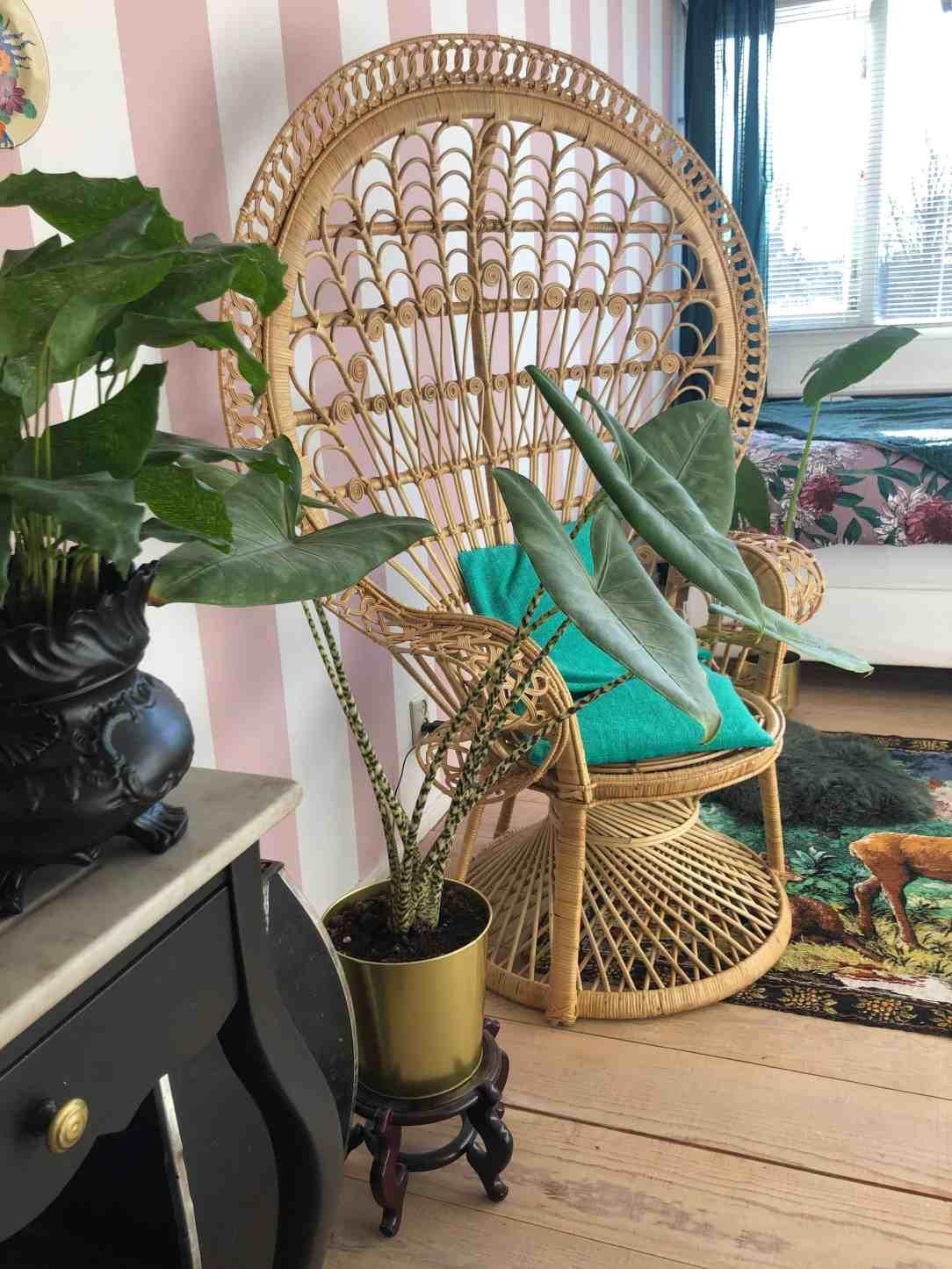 Peacock-chair-rotan-riet-bamboe