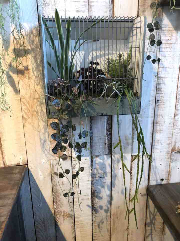 Q&A- vogelkooi met plantjes