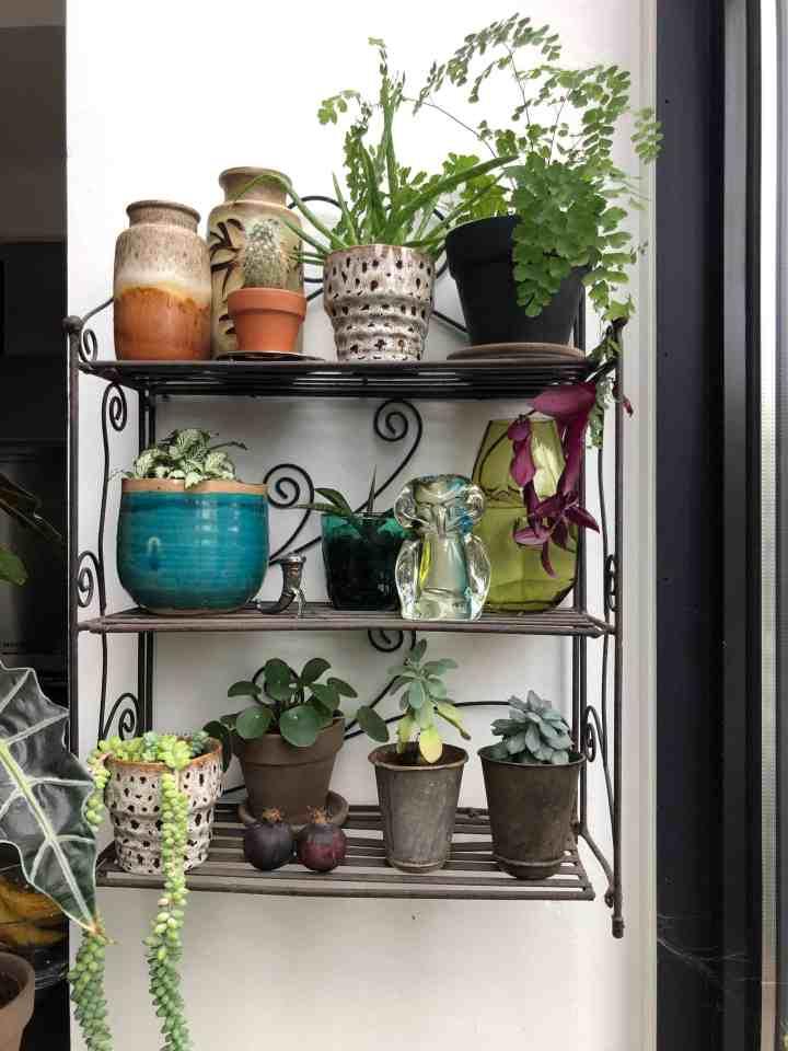 lege muur veranderen met planten
