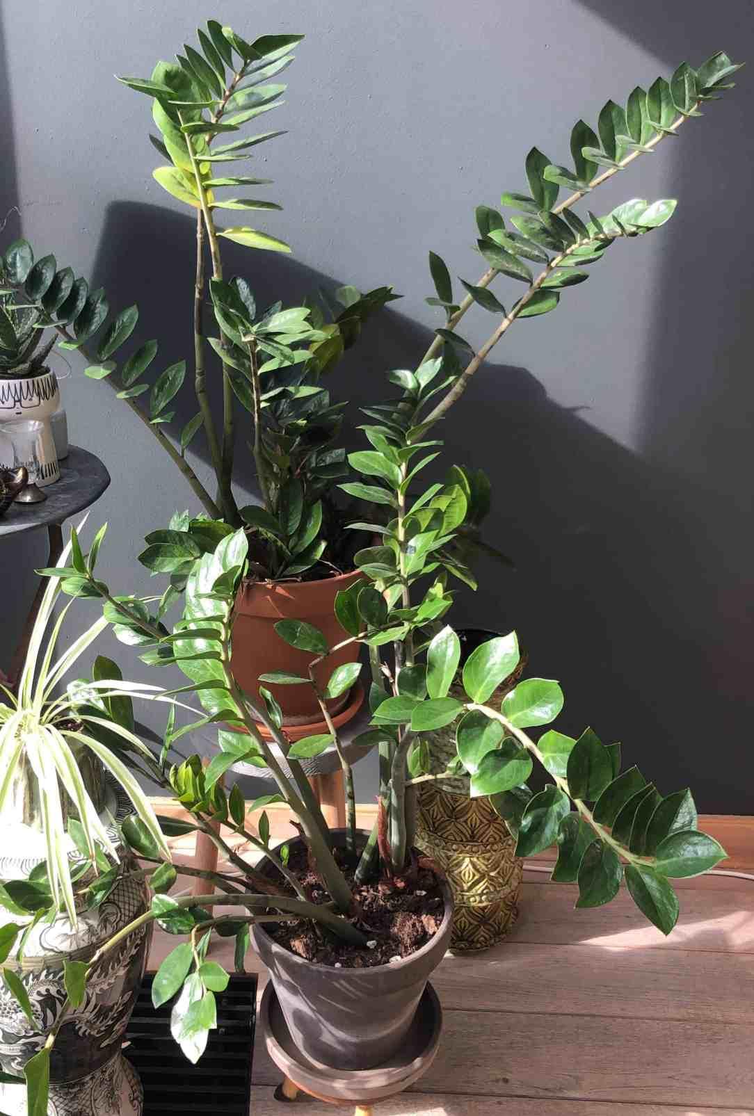 donkere muur met planten