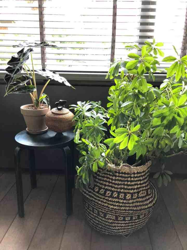 rieten mand met plant, woontrends