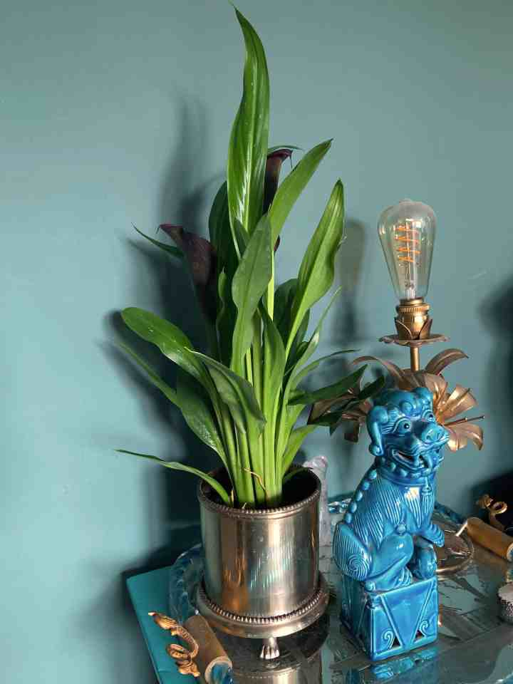 plant is slaapkamer
