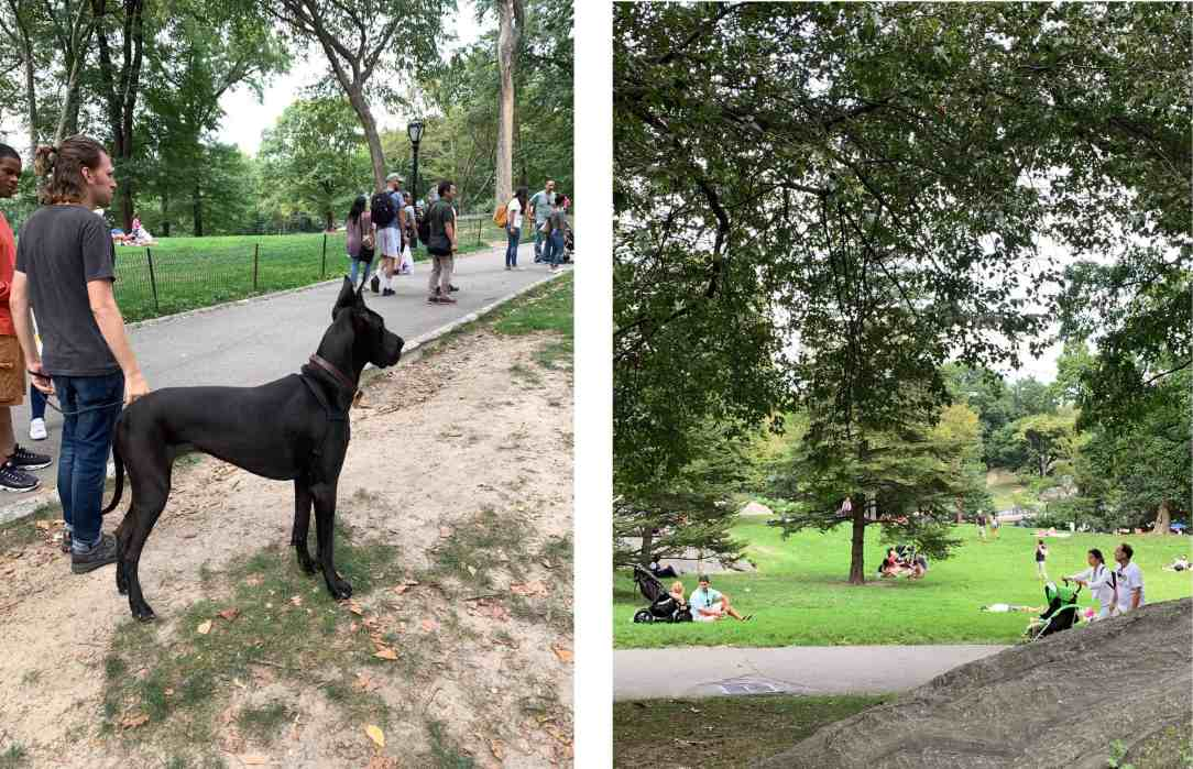 collage-Central Park-New York(1)