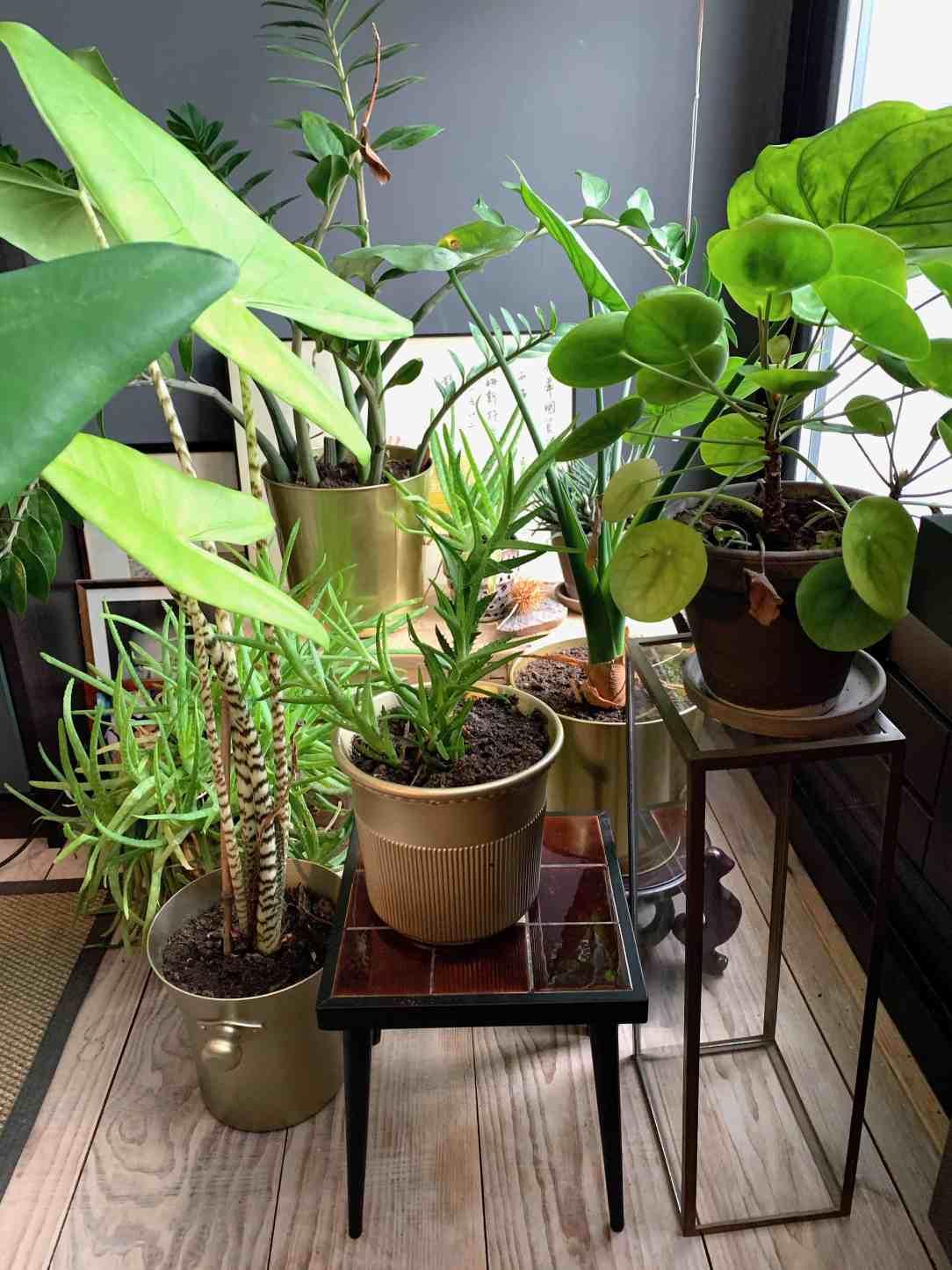 energieboost-planten op (werk)plek