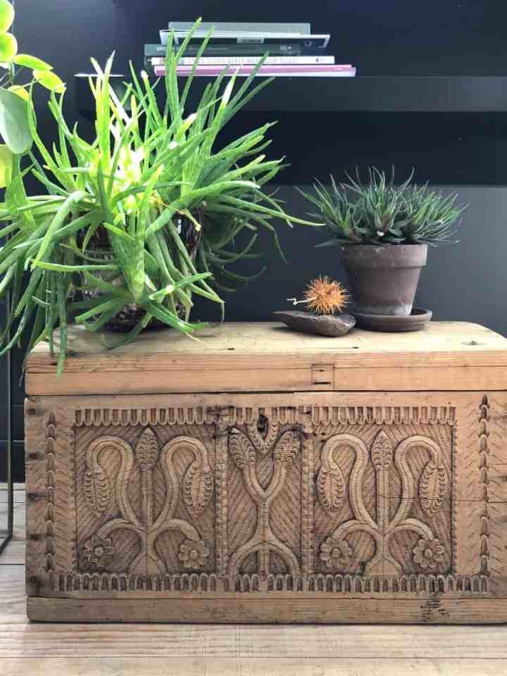 Aloe Vera-planten waar je geen omkijken naar hebt