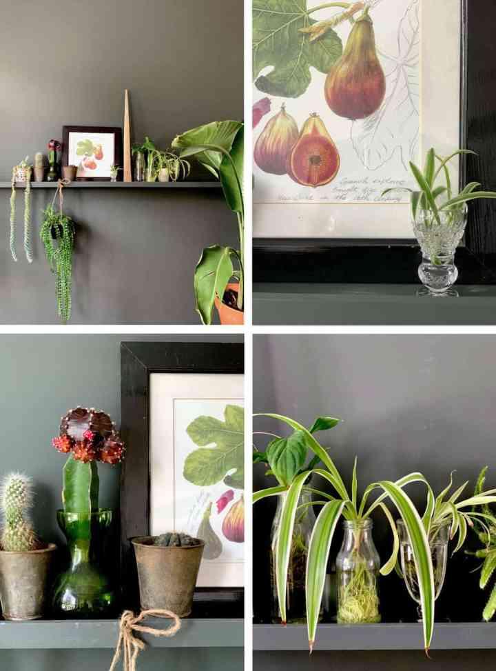 Schilderijplank met planten