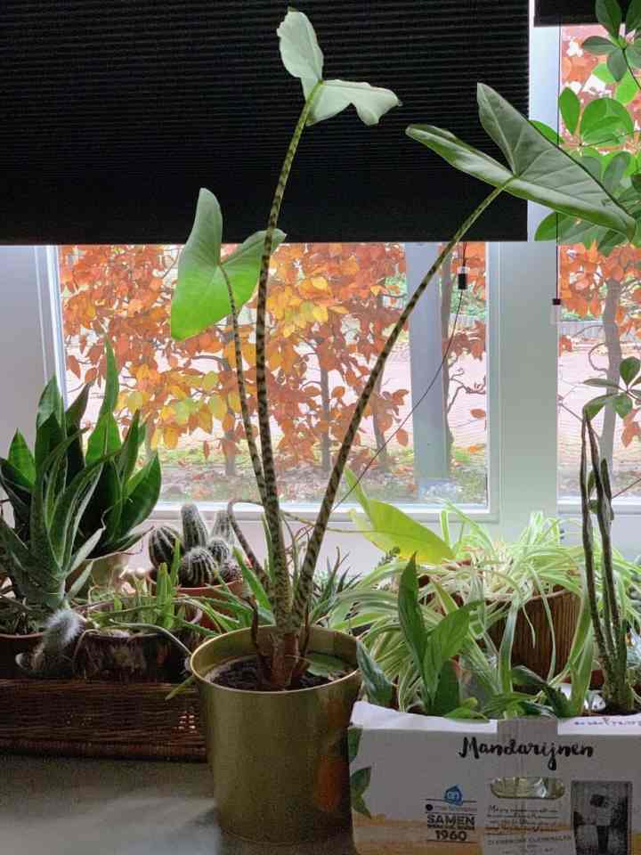 Mijn planten