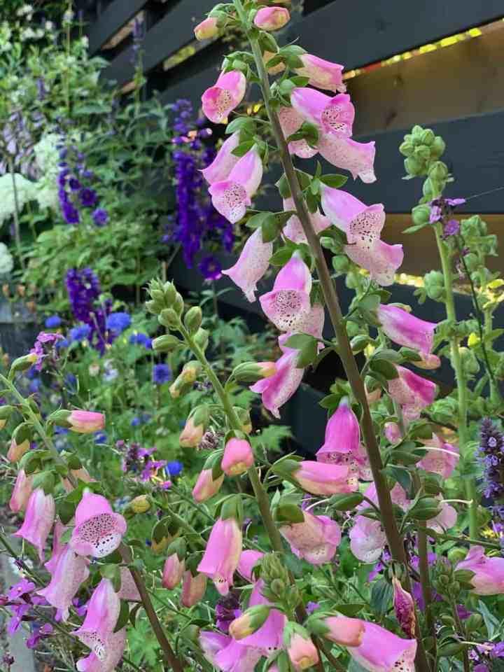 bloeiende tuin