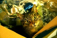 Sammie in the decorations box