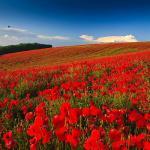 Ambivalence on Remembrance Day: The old lie, Dulce est Decorum Est Pro Patria Mori
