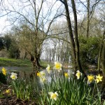 Spring at Waterperry Gardens, Oxford: Oxfordshire Walks