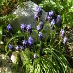 Spring Wild Flowers in Corfu (Guest post by Roy Mathias)