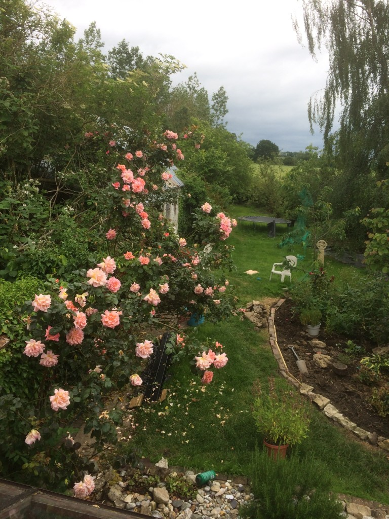 View of my garden from our bedroom window
