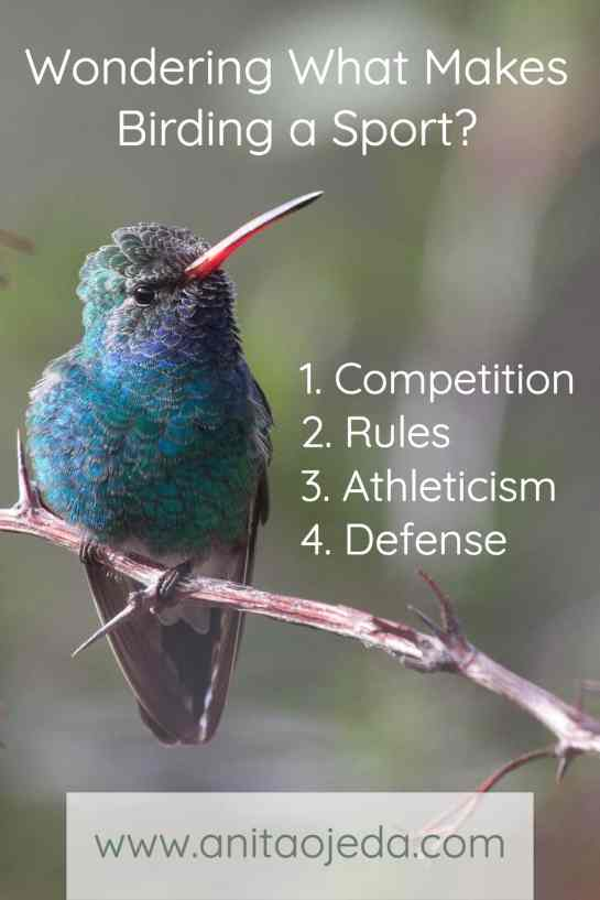 Have you ever wondered what makes birding a sport? Find out here! #birding, #sport,#birdwatching