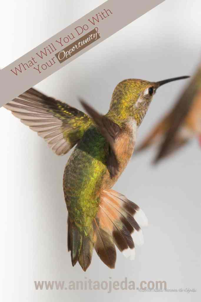 A poem by Mary Oliver comes to mind when I watch hummingbirds jostle for position. What will you do with the opportunity God gives you? #opportunity #hummingbird #observation #Christianity