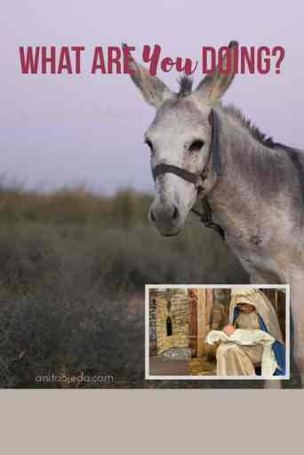 What are you doing, Joseph? Don't you know that Mary's great with child? Have you ever wondered what in the world Joseph was thinking as he loaded his very pregnant wife on a donkey and traveled to Bethlehem? #nativity #mary #joseph #babyjesus #immanuel #Christmas #gift