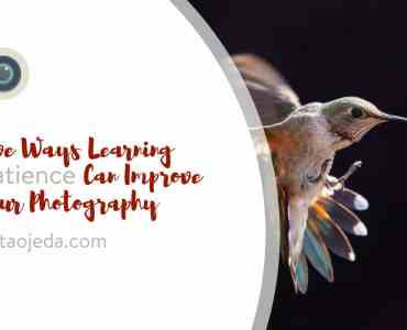 Have you ever thought of the connection between patience and good photos? Improve your patience, and you can improve your photography! #patience #practice #hummingbirds #improveyourphotography #write28days #blogger #instagrammer #photogrpahy #DSLR #camera #selfcare