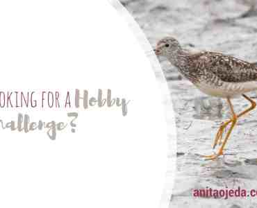 This month is all about hobbies, and I found the perfect hobby challenge if you're looking to expand your creativity! #hobby #hobbies #photography #alaska #birdphotography #naturephotography #selfie #selfcare