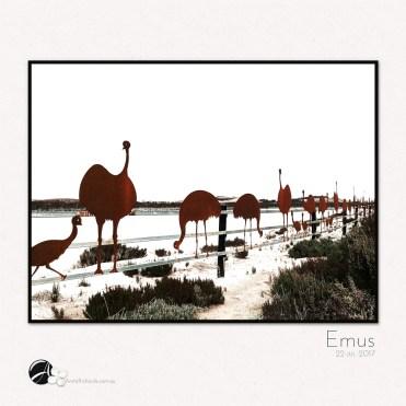fridayFOTO :: Emus