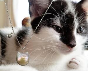 Cat & paw