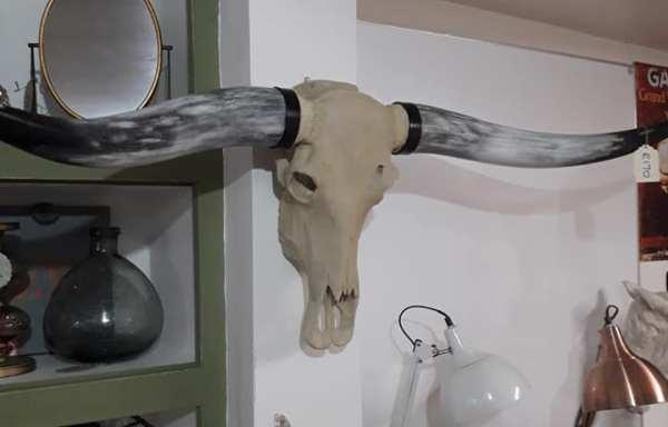Large bison head