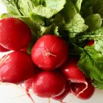 Growing Up Radish