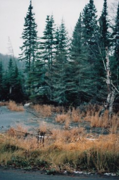 wetlands near Babbitt, Mn