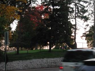 fall_color_tree_Edina