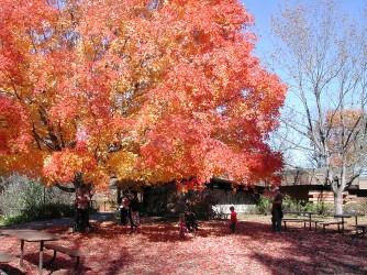 Lowry_Nature_Center_fall_tree