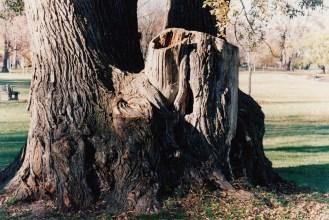 old tree / photo