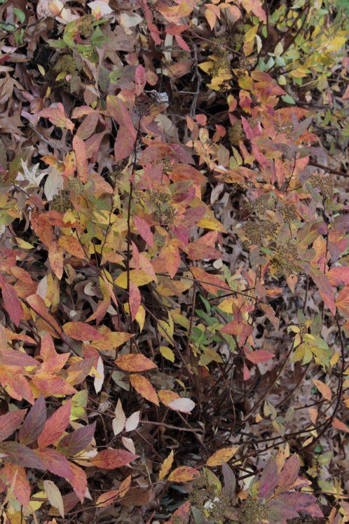 fall_color_foliage
