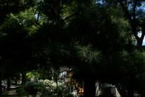 tree_2994