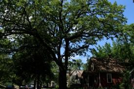 tree_2999