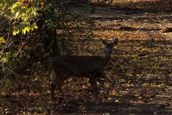 deer_1502
