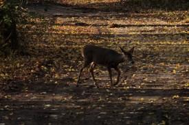 deer_1505
