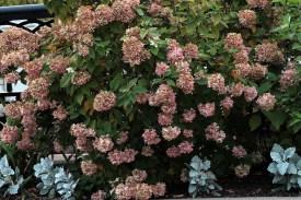 Flowers_1203