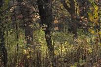fall_color_tree_1489