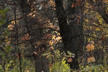 fall_color_trees_1490