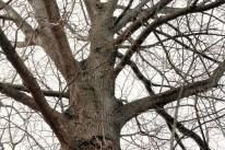 tree_3700