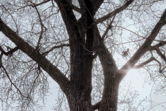tree_3868