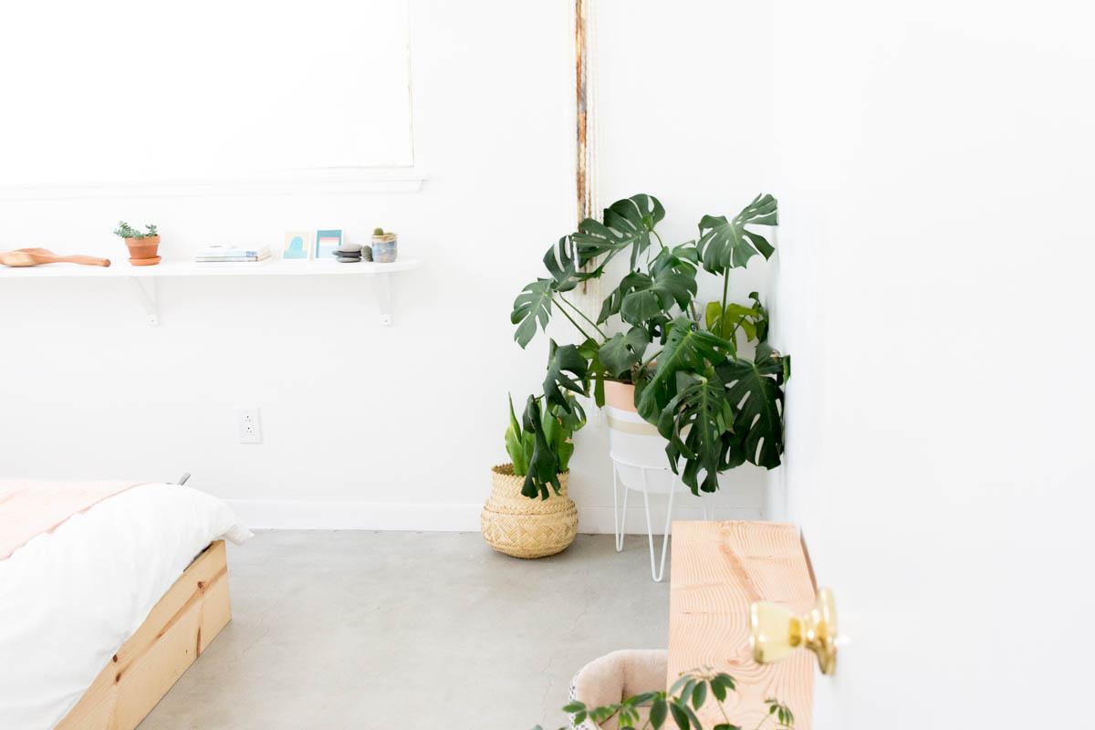 desert concrete floors plants and shelves bedroom