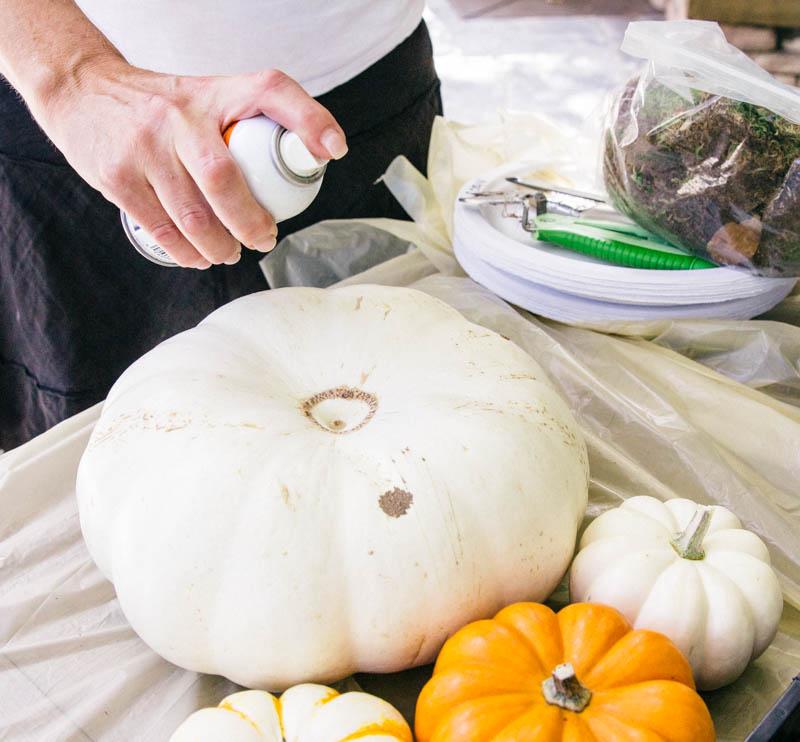 DIY Pumpkin Succulent Fall Decor Home Adhesive Glue Spray