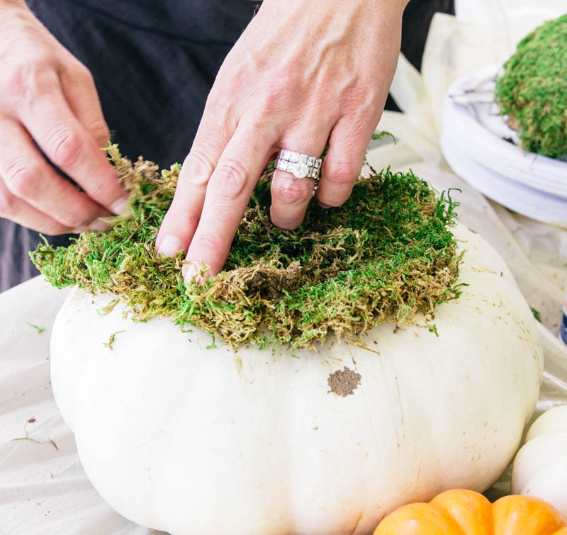 DIY Pumpkin Succulent Fall Decor Home Craft Moss