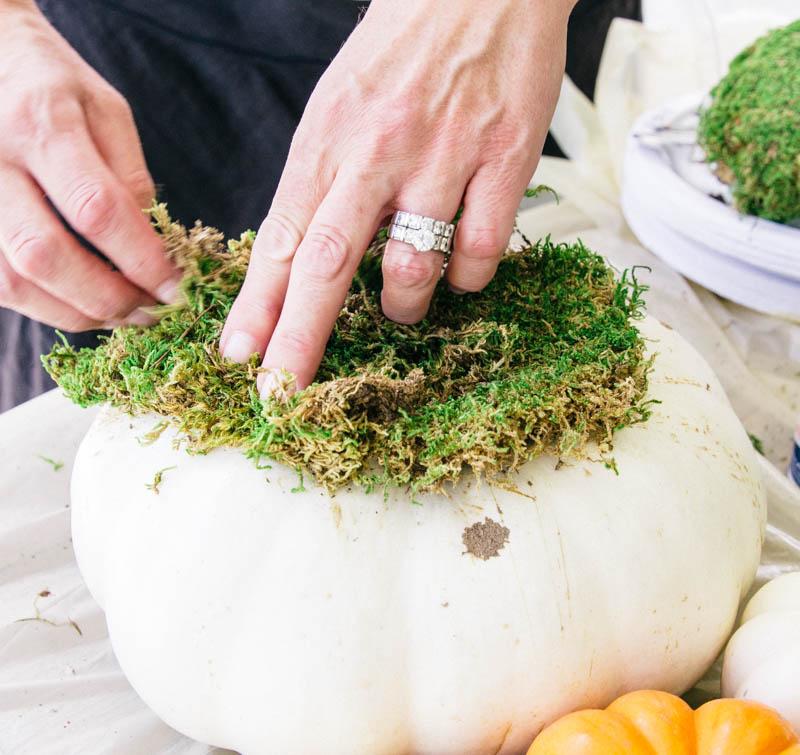 DIY Pumpkin Succulent Fall Decor Home Craft Moss