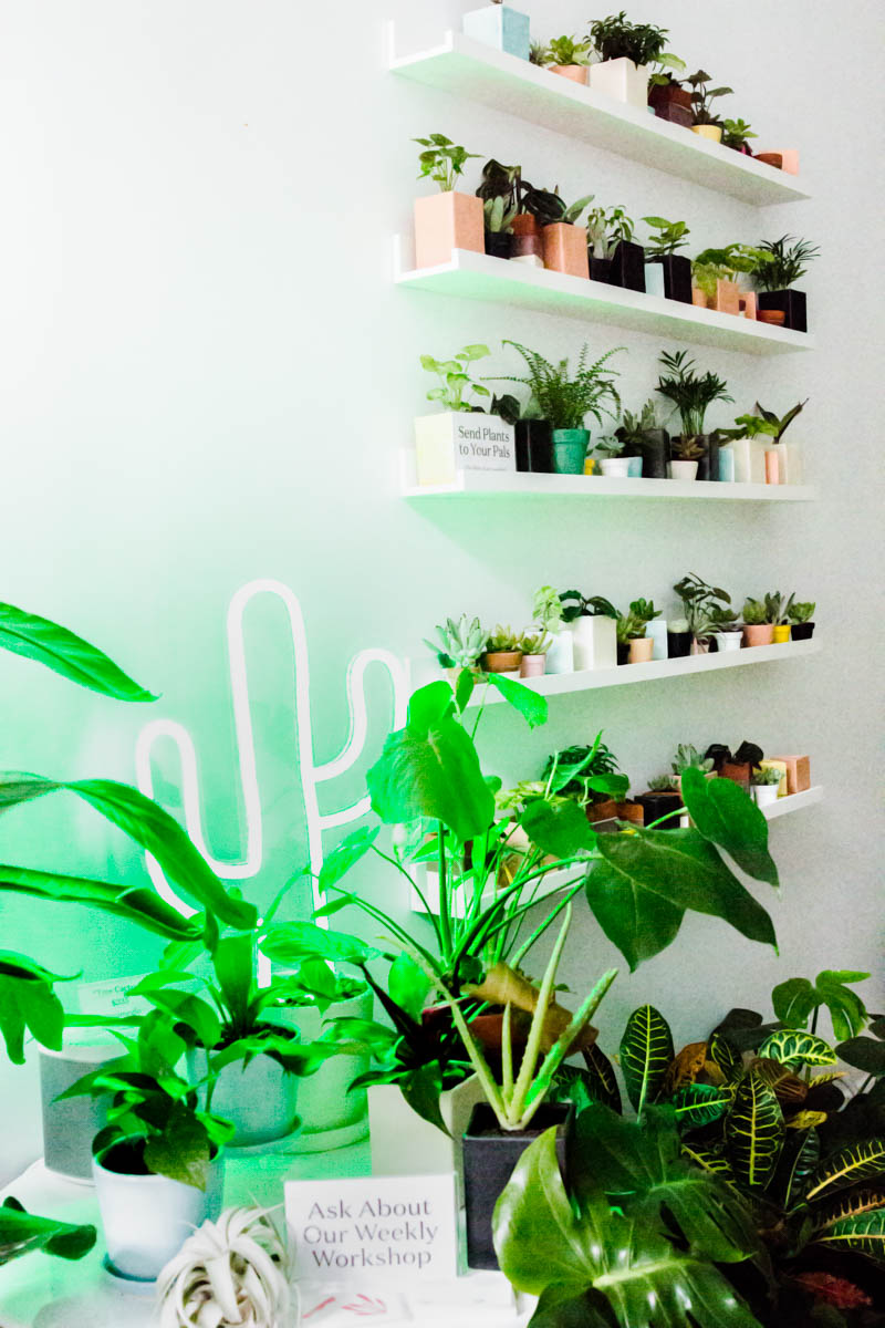 Elizau0027s Mission For The Sill Is To Utilize The Love Of Being A Plant Parent  Into Building Community And Content So That Not Only Are Our Plant Babies  Happy, ...