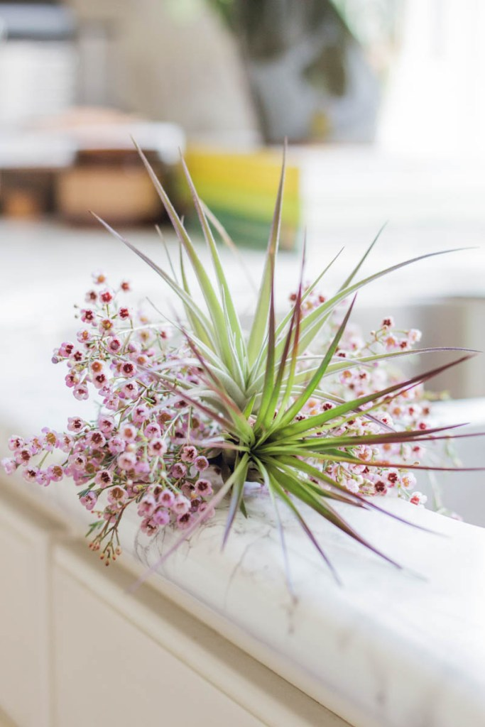 air plant wild flowers white kitchen