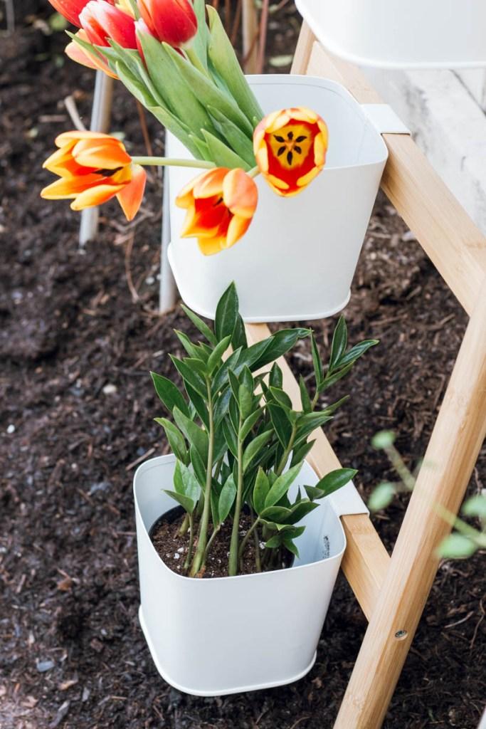 ikea satsuma ladder tulips the sill